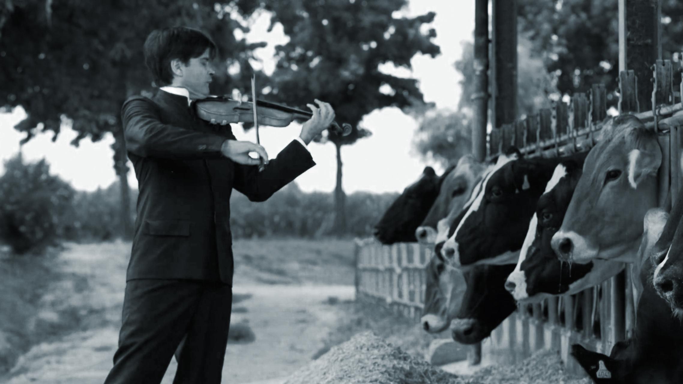 Happy Cow Concert